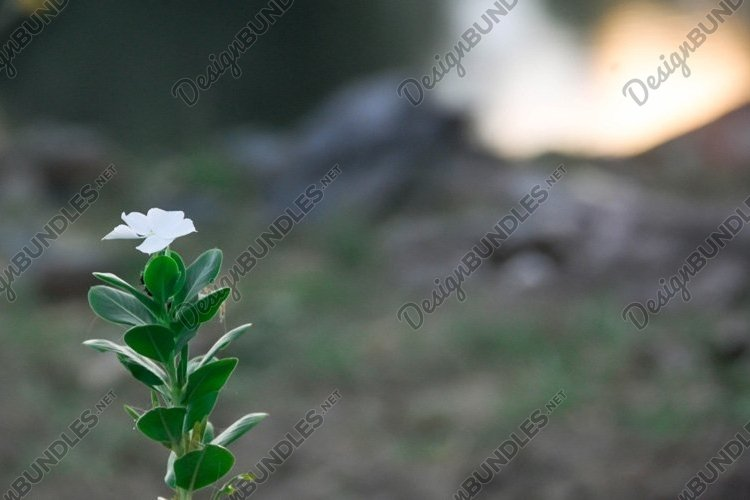 White flower example image 1