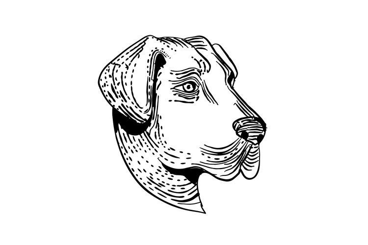 Anatolian Shepherd Dog Etching Black and White example image 1