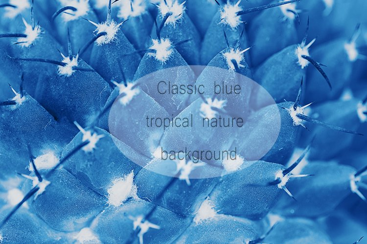 Cactus surface with needles pattern macro toned in blue example image 1