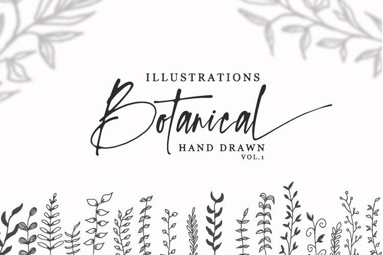 Botanical Hand Drawn Illustrations Vol 1