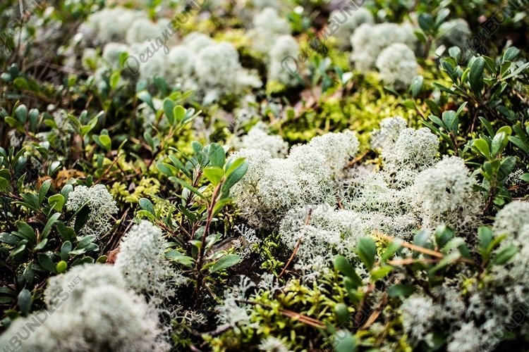 Moss bundle
