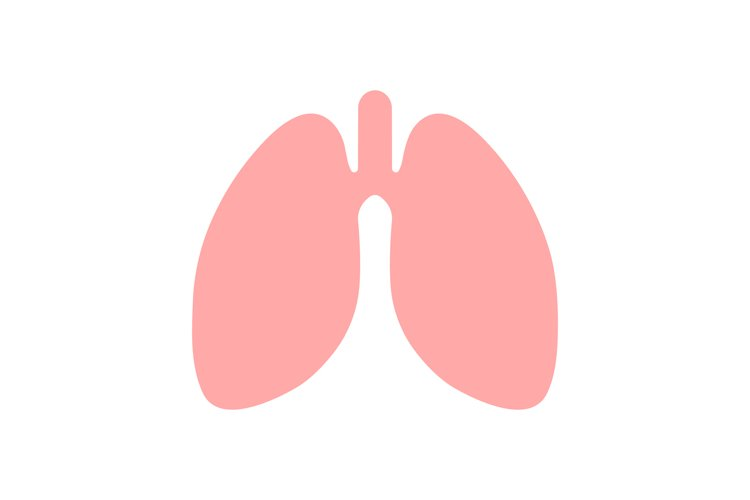 Lungs vector icon. Lungs symbol isolated example image 1