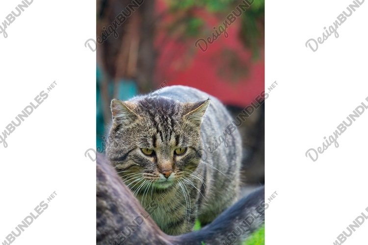 Tabby cat in a green summer garden example image 1