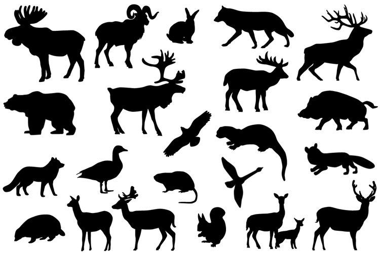 Animals of Europe example image 1