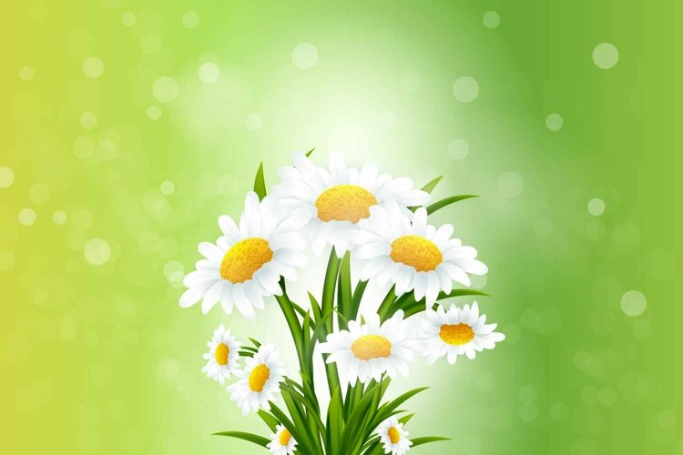Spring background with chamomile flowers bouquet