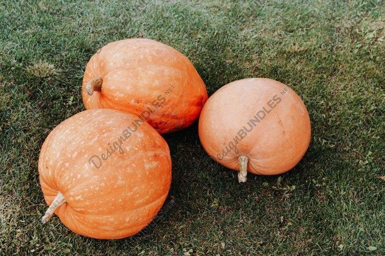 Three pumpkins on the green grass