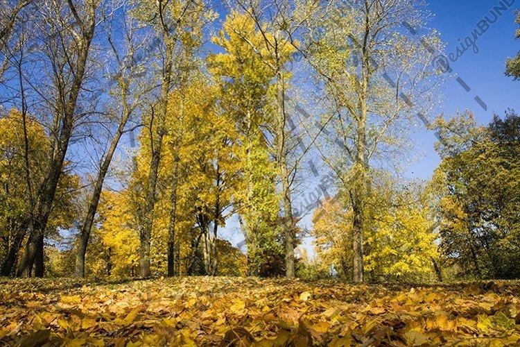 yellow foliage before falling example image 1