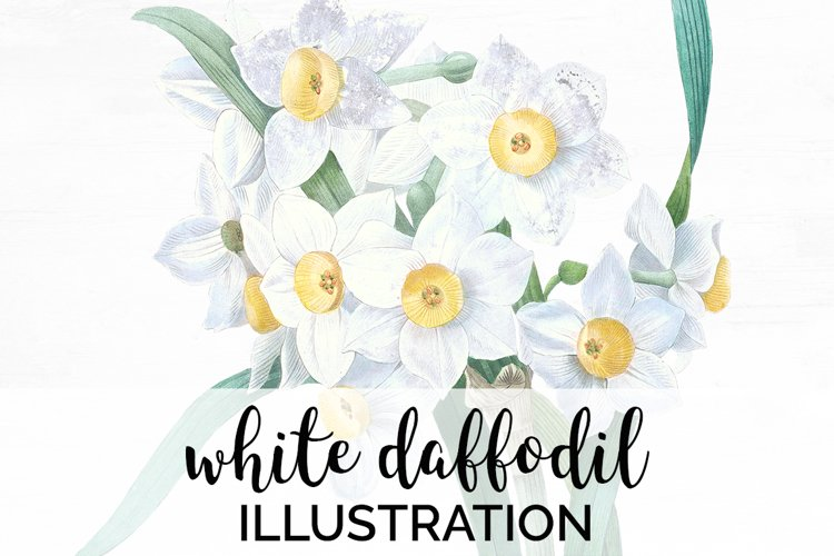 Daffodil Clipart White Flowers Vintage