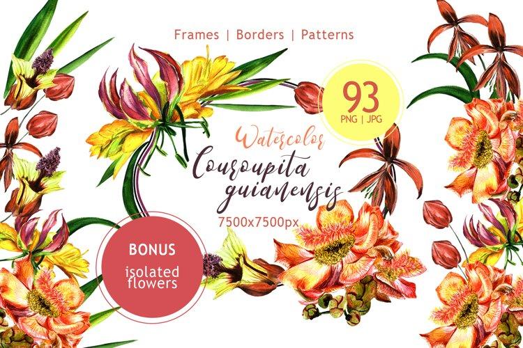 Couroupita guianensis PNG watercolor set example image 1
