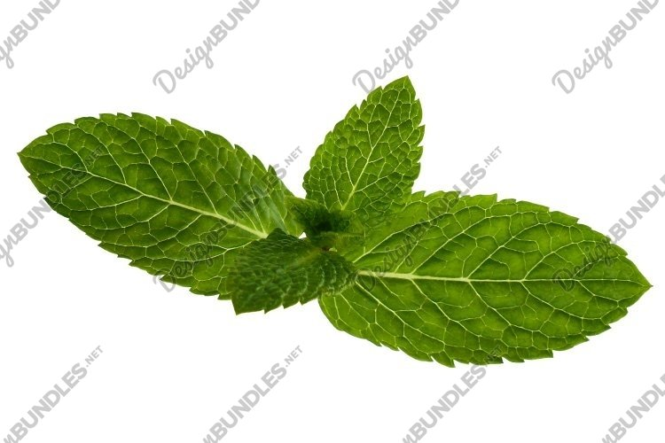 Mint Leaves Isolated on White example image 1
