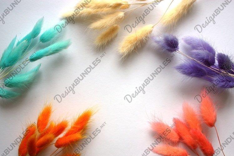 Lagurus multicolored background