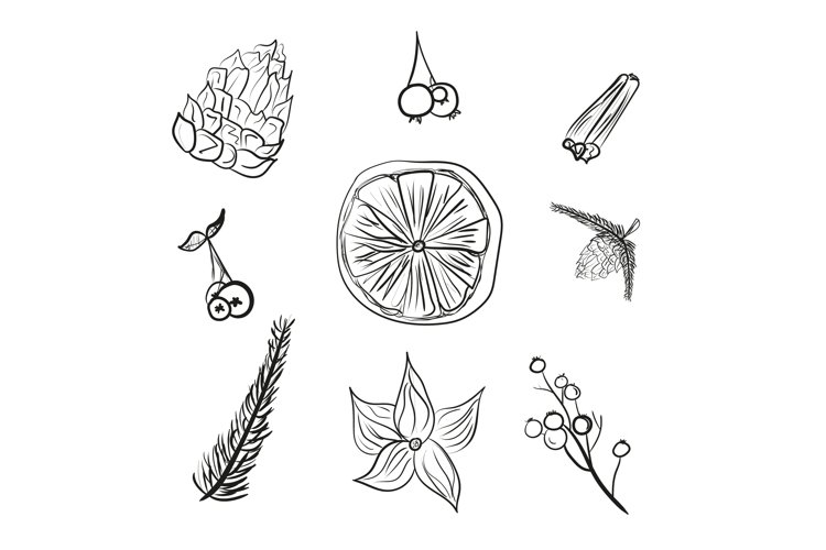 Doodle winter floral set isolated vector illustration. example image 1