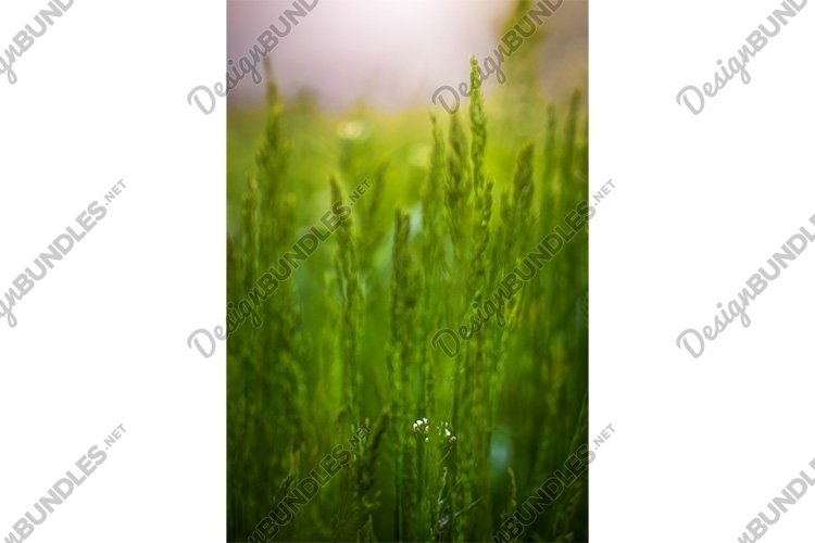 Stock Photo - green grass on a summer sunny day close up. example image 1