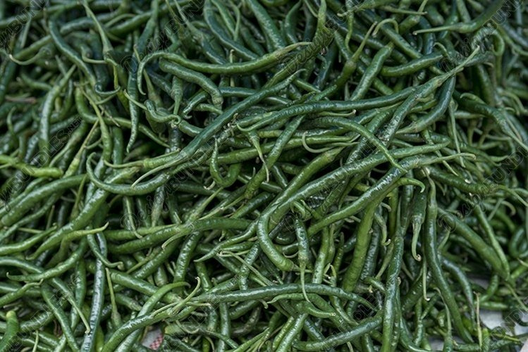 green chilies are ready to be sold in the market