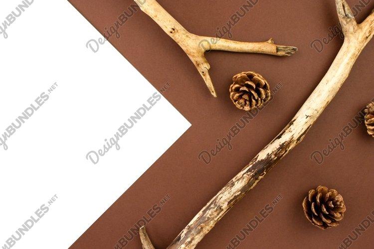 Wooden branches, fir cones. Forest background. Autumn decor
