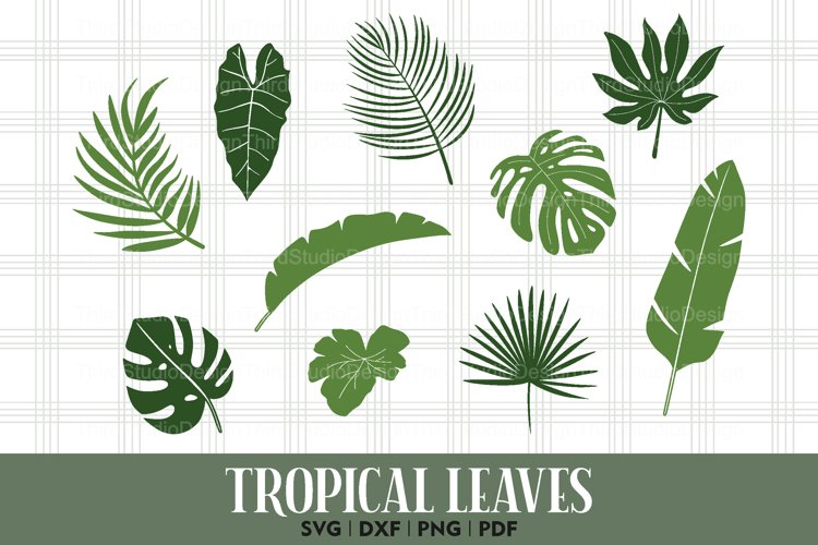 Aqc1 Kln2zktlm All contents are released under creative commons cc0. https designbundles net sweetshopdesign 1097425 tropical leaves svg jungle leaves svg plants svg