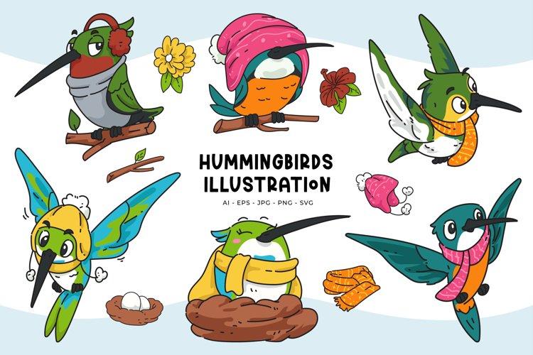 Hummingbird Illustrations
