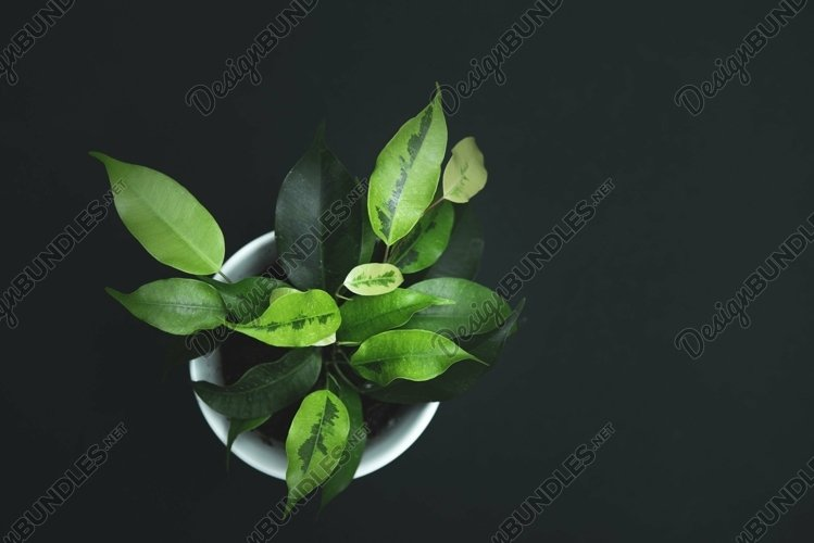 plant in a white pot on a black background example image 1