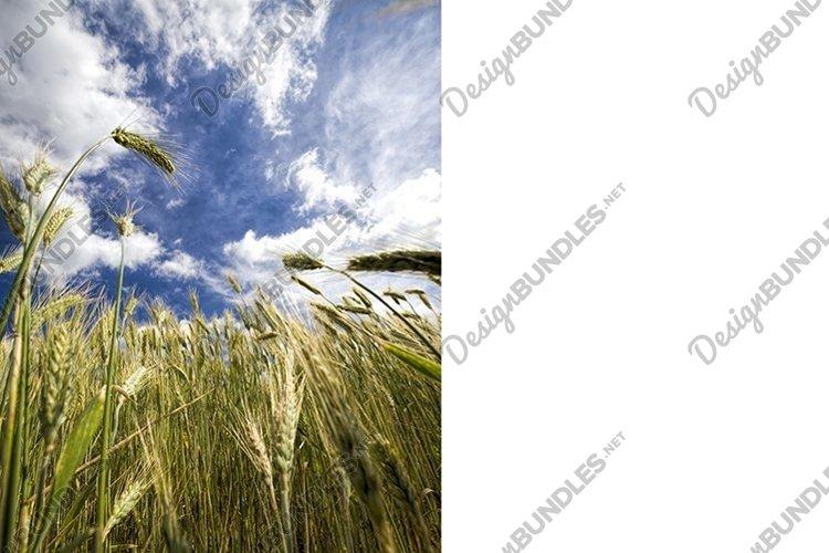 real organic green rye example image 1