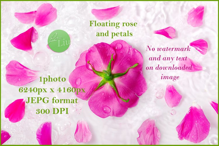 Beautiful pink rose and petals floating in water example image 1
