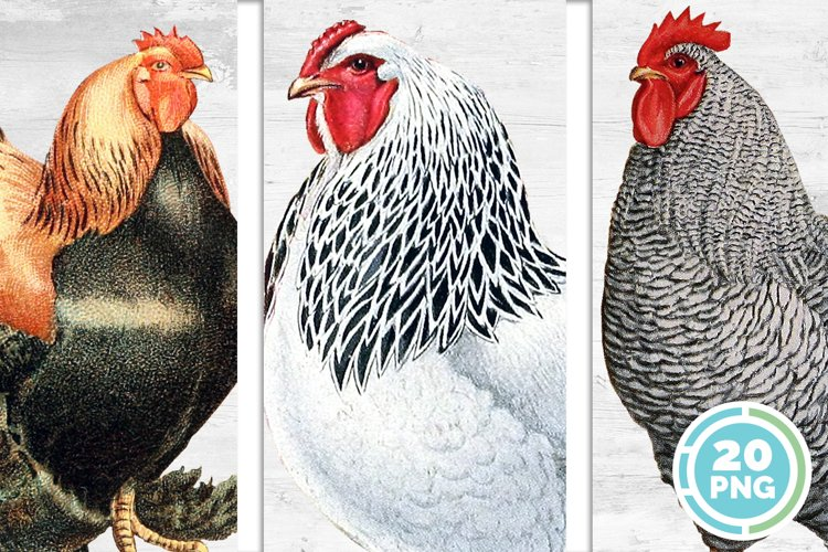 Chicken Clipart Bundle