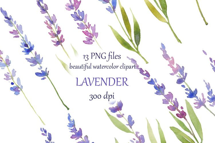 watercolor hand painted Lavender Clipart example image 1