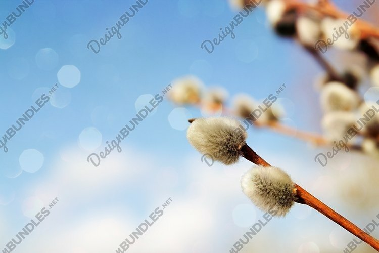 Spring willow against the blue sky and bokeh example image 1