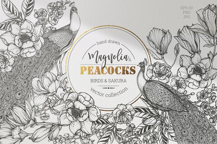 Magnolia and peacocks vector set