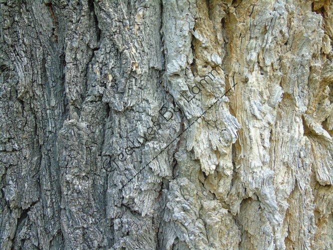 Tree Bark Background example image 1
