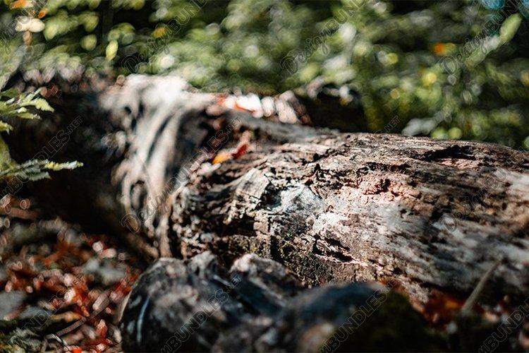 Tree bark close-up example image 1