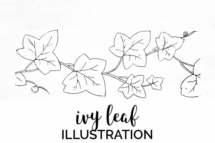 Ivy Leaf - Vintage Plant Engraving example image 1