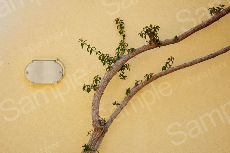 Tree on the yellow textured wall example image 1