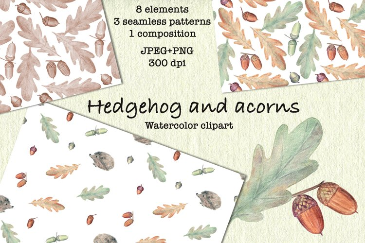 Hedgehog and Acorns. Autumn Watercolor clipart. JPEG, PNG example image 1