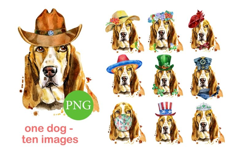Portraits of basset hound