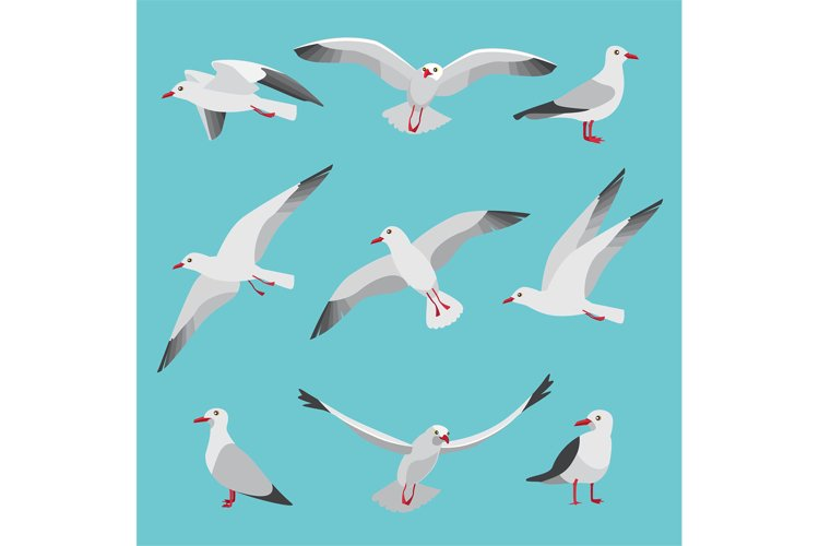 Set illustrations of atlantic seagulls in cartoon style. Pic example image 1