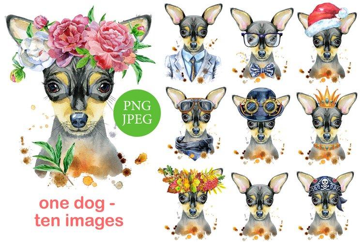 Watercolor portrait of toy terrier