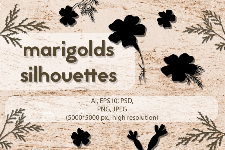 Set of Hand-Drawn Isolated Flowers Silhouettes PNG