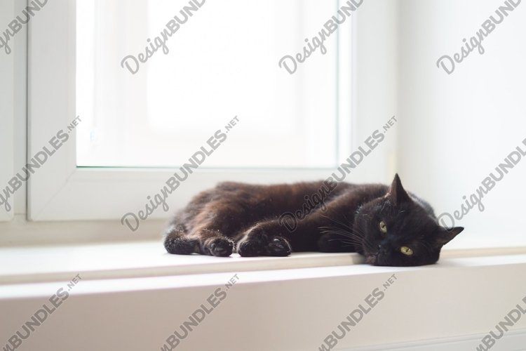 A black cat with yellow eyes is lying on the windowsill