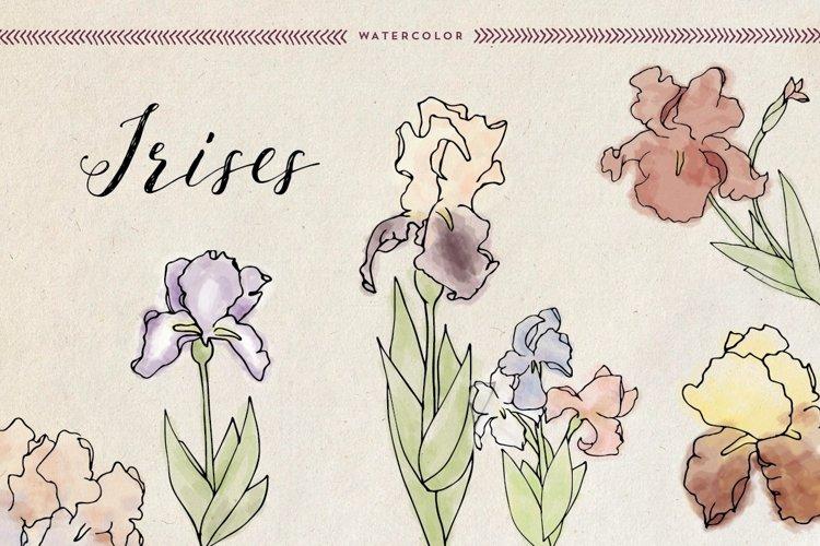 Watercolor Irises example image 1