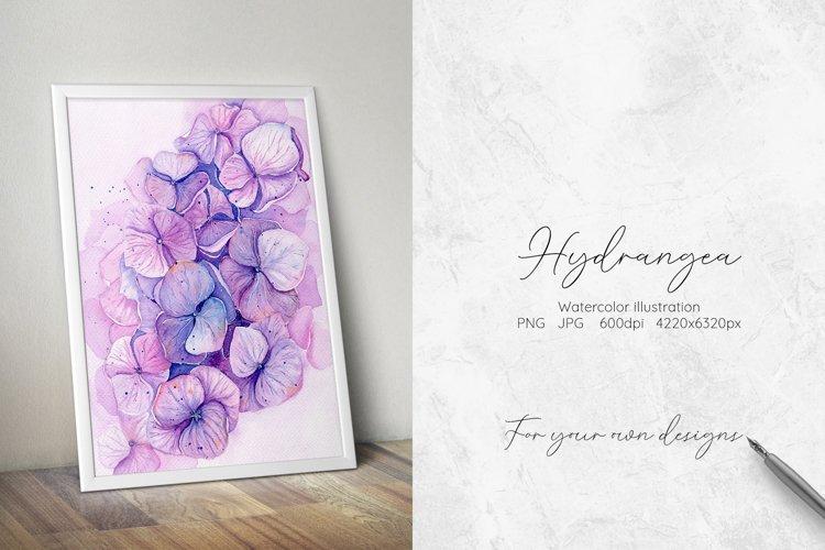 Hydrangea Watercolor Illustration example image 1