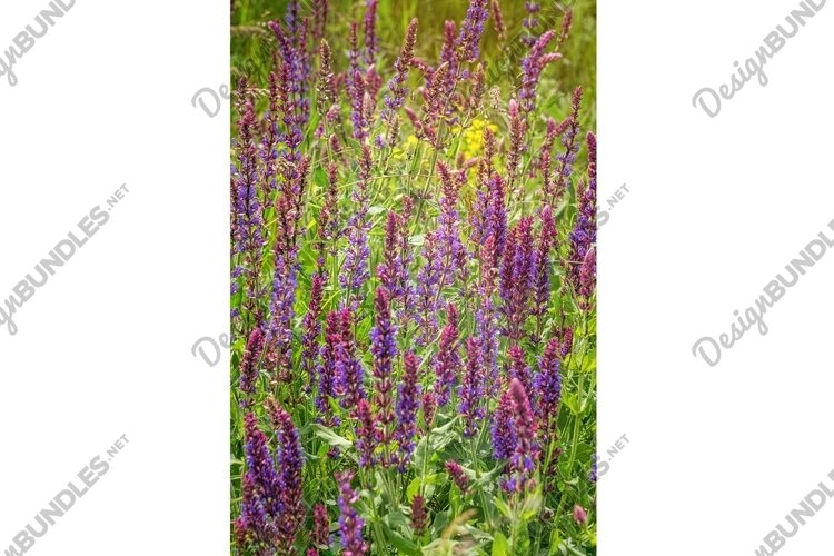 Summer wildflowers and sunny meadow example image 1