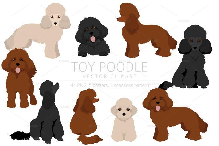 Toy poodle clipart