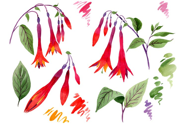 Orange-red Fuchsia watercolor png example image 1