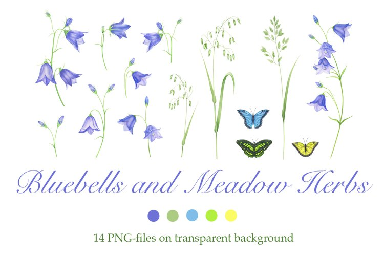 Bluebells and Meadow Herbs example image 1