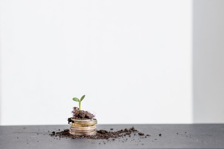 The seedlings are growing on coins example image 1
