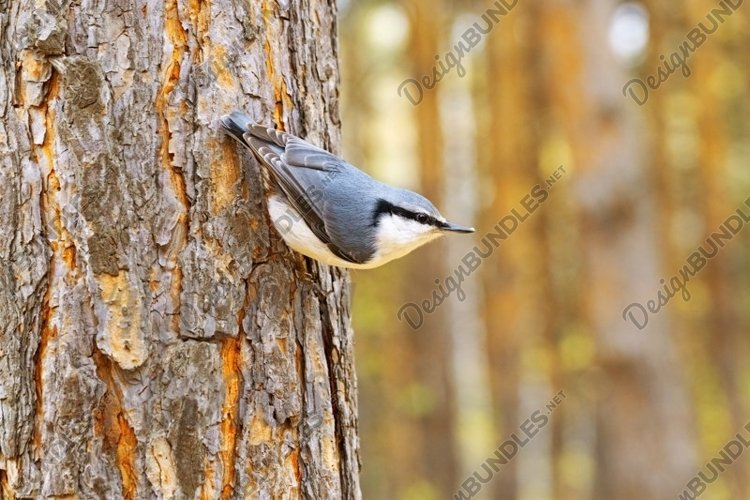 Little bird nuthatch sits on hand at autumn time example image 1