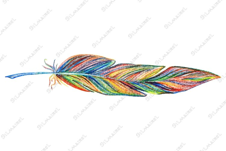 Rainbow colorful bird feather vector single isolated example image 1