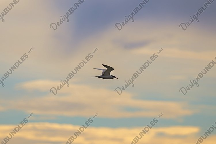 Seagull in the morning sky example image 1