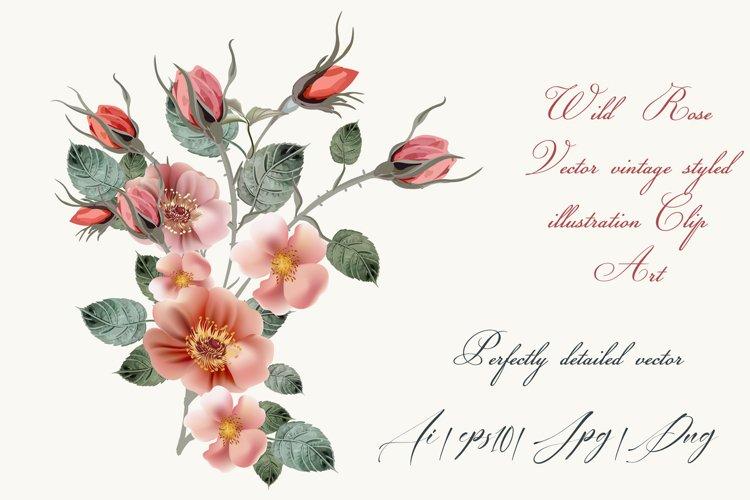 Vintage wild rose, high detailed vector rose illustration example image 1