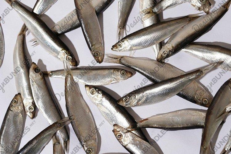Fish background on white, fresh seafood, fishing